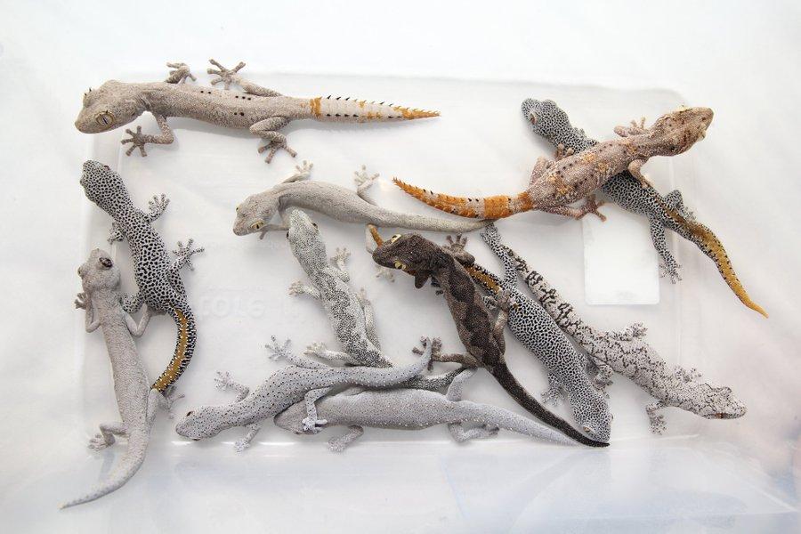 Breeder females 2019