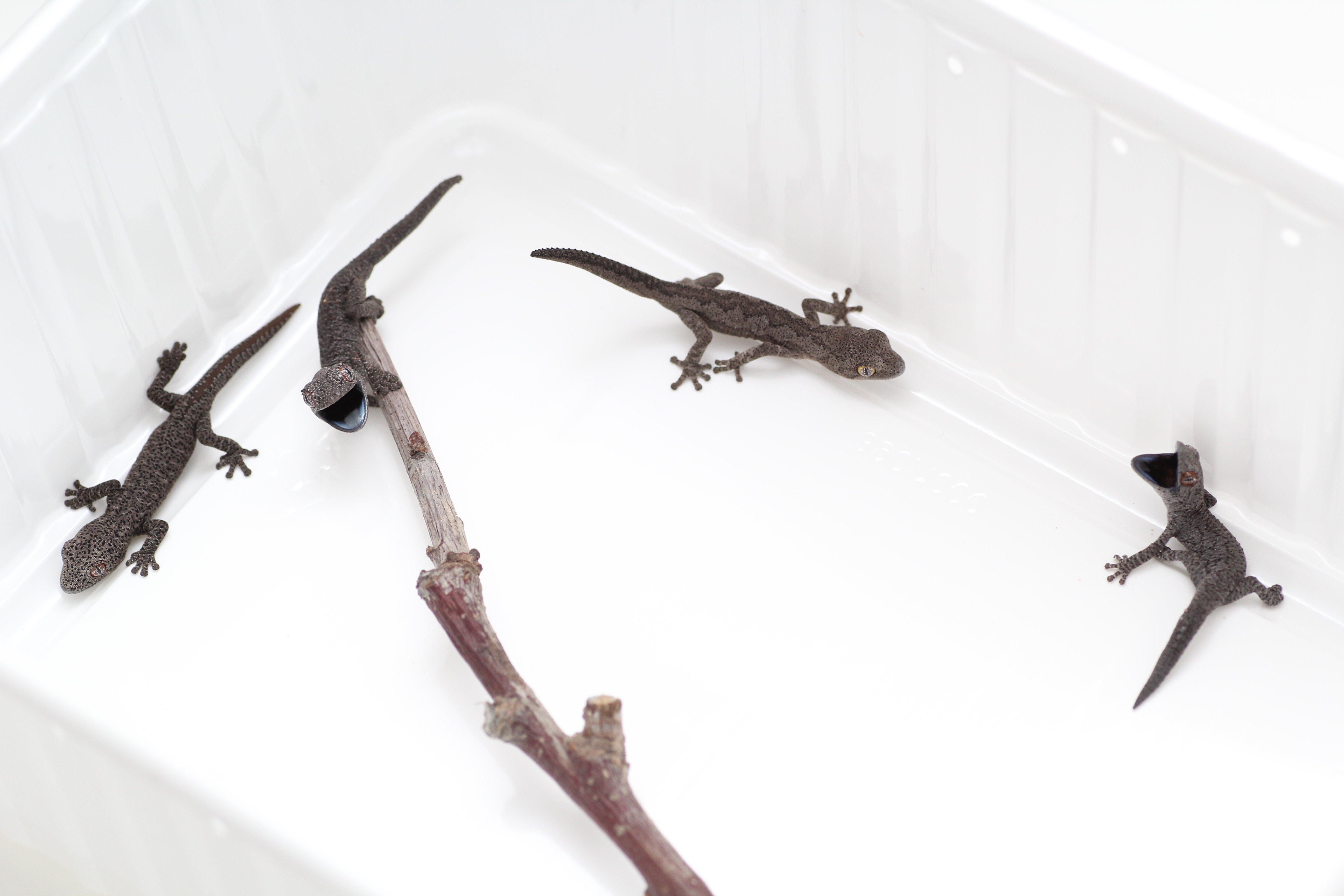 Four species hatched.